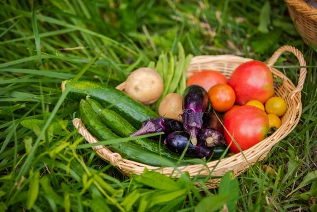 田舎暮らしで農家になりたい真の理由とは?